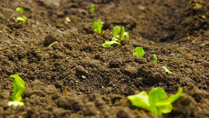 轮作倒茬种植,平衡土壤肥力瓦解病虫害繁殖环境